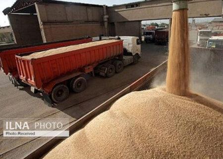 تحقق ۷۸ درصد برنامه تولید بذر گندم
