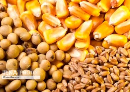تخصیص ارز ترجیحی به واردات بذر علوفهای/ فهرست واردکنندگان نهادههای دامی رسوبی شنبه به بانک مرکزی میرود