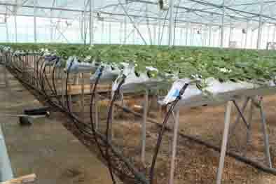 بهره برداری از گلخانه هیدروپونیک سبزی و صیفی در استان قزوین