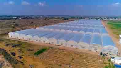 حمایت ۱۰۹ میلیاردی بانک کشاورزی از راه اندازی گلخانه سبزی و صیفی در استان بوشهر