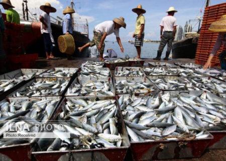تولید ۵٠٠ تن ماهی تیلاپیا در ۴ استان کشور