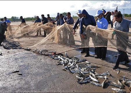 معرفی گونههای جدید ماهی به صنعت آبزی پروری