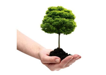 کاشت درخت به نام پزشکان با شعار ایستادی تا زندگی نیافتد