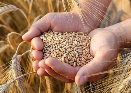 با عاملیت بانک کشاورزی مطالبات گندمکاران پرداخت شد