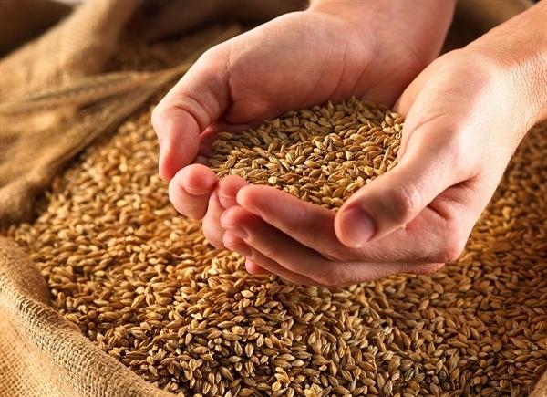 واریز بیش از۲۰۰هزار میلیارد ریال وجوه خرید تضمینی گندم توسط بانک کشاورزی